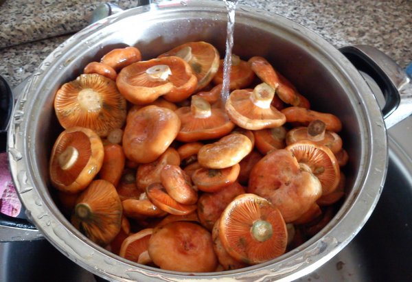 Маринованные рыжики: различные варианты приготовления