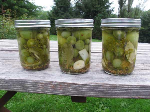 Маринованные зеленые помидоры: популярные рецепты
