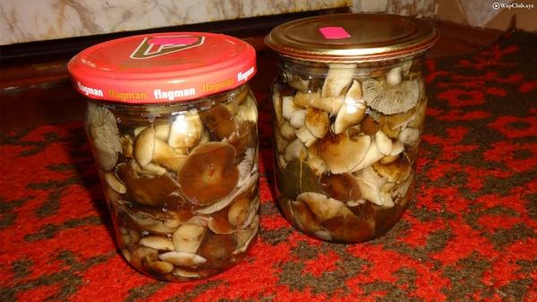Как солить маслята: 6 чудесных рецептов на зиму